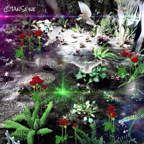 Okay, the critters are still here and we are trying some more plants. Hopefully no more critters with teeth and tunneling capability. Garden AMPt_community Eye4photography  Landscape_Collection