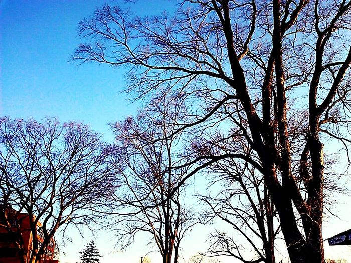 Taking Photos Minnesota Trees