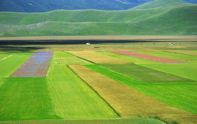 agricultural fields in the Castelluccio di Norcia plateau Agriculture Agricultural Field Field Blooming Green Color Vibrant Color Flowering Plateau Colorful Landscape Environment Scenics - Nature Beauty In Nature Grass Idyllic Outdoors Nature Tranquil Scene Tranquility