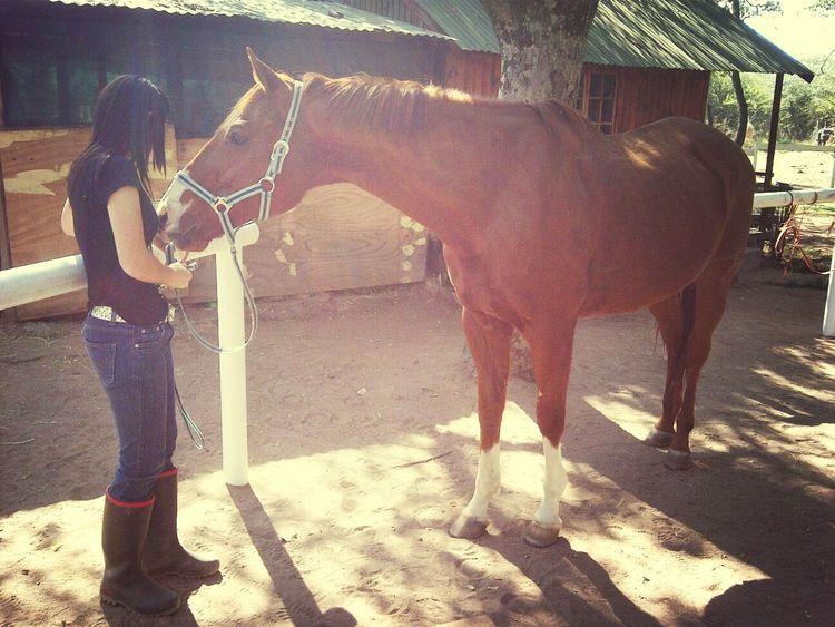 Loving Horses Loving My Man  Love