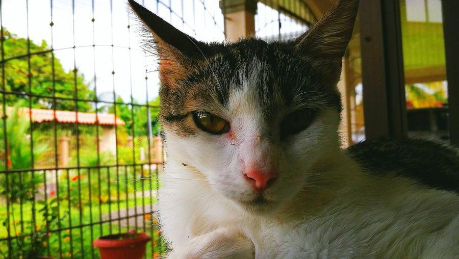 Cat art First Eyeem Photo