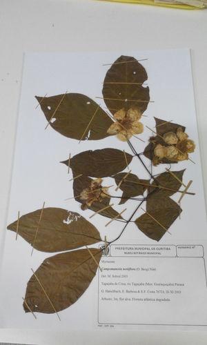 Biology Specimen Flower Exsicata