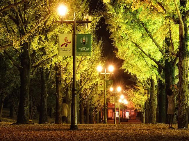 銀杏並木 銀杏 熊本県庁プロムナード 熊本県庁 熊本 Tree Outdoors Nikond7200 Nature Kumamoto D7200nikon D7200 Autumn