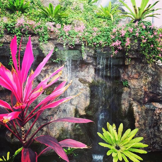 Plant Flowering Plant Flower Growth Pink Color Beauty In Nature Nature