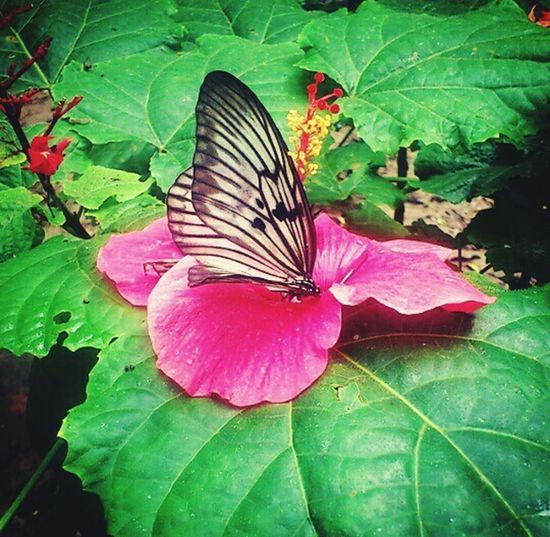 A moment when. Butterfly Butterfly ❤ Flower Bantimurung Bantimurungnationalpark Autofocus