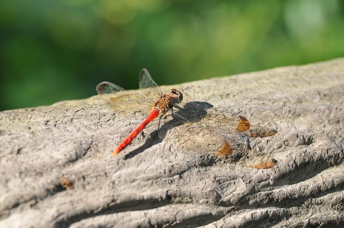 Insect Animals In The Wild Animal Themes Day Animal Wildlife Outdoors No People One Animal Perching Close-up Nature Sunlight