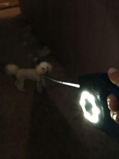 Sammy's new gadget, dog life, Hawaii, lucky we live Hawaii, Gold Coast, surf path, Enjoying Life Islandlife