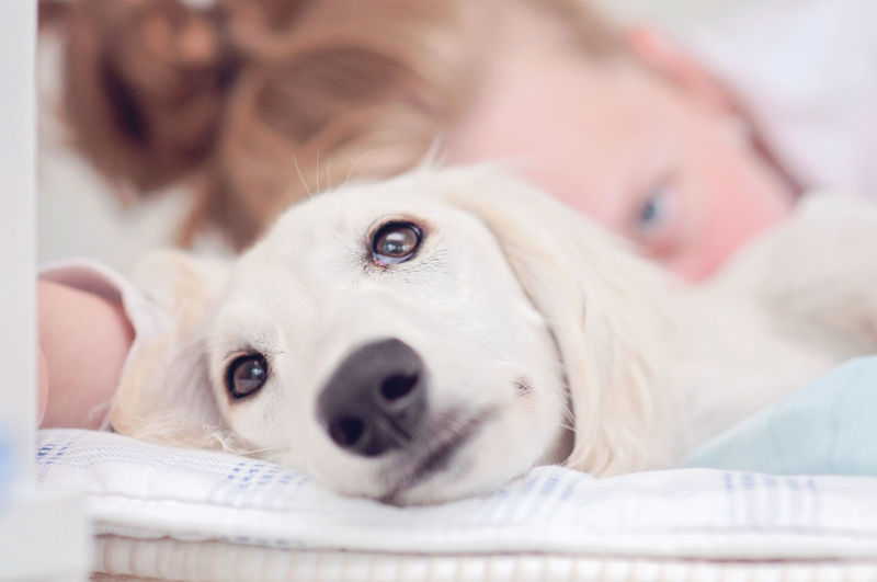 Close-up portrait of teenage boy with dog lying on bed at home