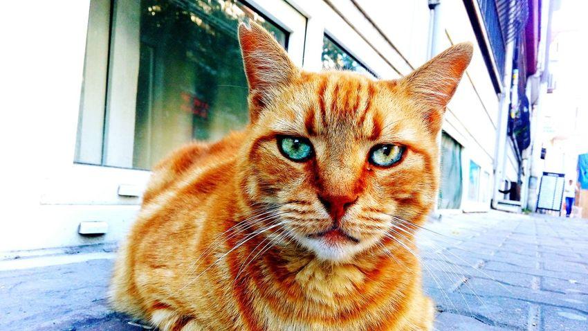 Kadıköy Cat Cat♡
