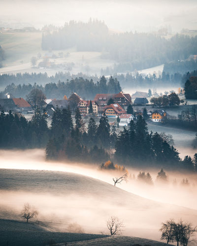 Tree Fog Beauty In Nature Scenics - Nature Tranquil Scene Plant Tranquility Sky Nature No People Environment Non-urban Scene Landscape Cloud - Sky Idyllic Land Day Outdoors Mountain Hazy  Morning Emmental Switzerland Schweiz