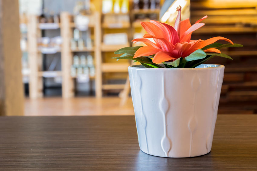 Artificial orange flower in ceramic white pot on dark oak table top in coffee shop, selective focus and blurred background. Artificial Backgrounds Beautiful Bloom Bouquet Close-up Coffee Time Fake Flower Fragility Indoors  Laminate Leaves Relax Shade Table Tablecloth Vase Waiting Area Waiting In Line