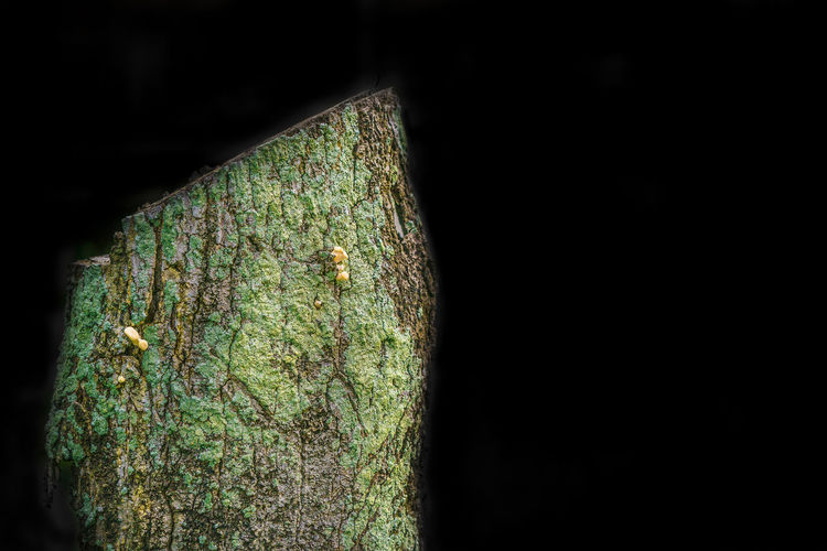 a tree being cut down to make way for village development, the dead trunk became a palce for a fungus to grow. Abstract Close-up Dead Fun Green Color Green Moss Growth Kaptenredeye Kula Living Organism Moss Mushroom Nature No People Outdoor Outdoor Photography Outdoors RedeyeXguide Sony Mirrorless Still Life Textured  Tree Trunk Tree Trunk Trunk Wild Mushrooms