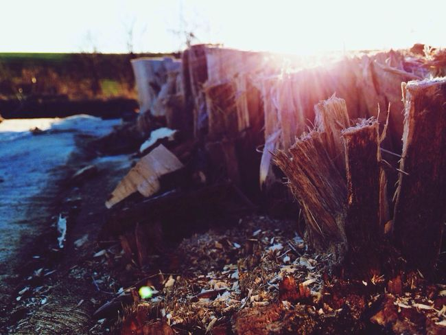 Today I visited nearby pond and I take this picture of stump. I just love it!
