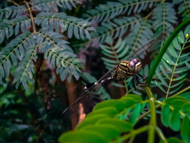 Insect Dragonfly Close-up Animal Wing Zoology Beginnings Depth Of Field Growing Botany Fragility New Life Detail Plant EyeEm Nature Lover No People Selective Focus Green Focus On Foreground Green Color Leaf Wildlife Winged Day Nature Animal Themes
