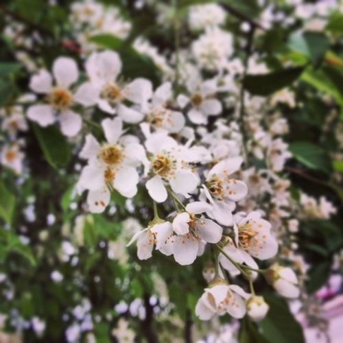 Nature Springtime Greeniday
