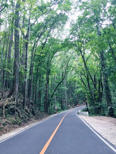 Asphalt Bohol Philippines Day Eyeem Philippines Forest Growth Man Made Forest Nature No People Outdoors Road The Way Forward Tree Winding Road If Trees Could Speak