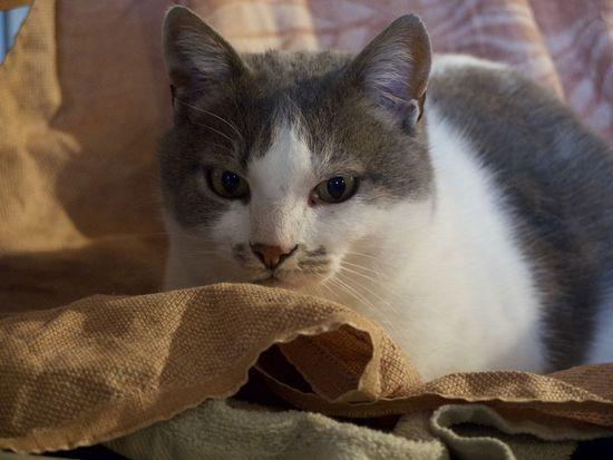 Animal Themes Cat Chat Domestic Animals Domestic Cat Feline One Animal Portrait