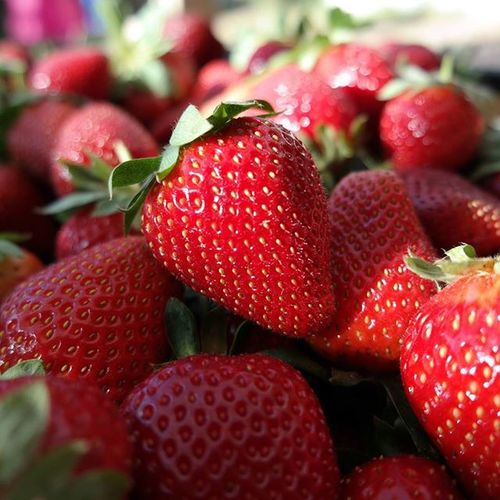Happy Saturday y'all! Lots of 'Stawberyeast' to brighten up the awful wet and windy Saturday! ☔ Throwback picture from last year, am looking forward for another trip this year! Bullsbrookstrawberryfarm Strawberrypicking 2014 Perthisok perthpop perthbites perthgrub perth perthfoodie pertheats perthfoodblog foodie foodpics foodphotography igfoodie foodporn instafoodie perthgram nofilter happyperth thefoodie thefoodiehub ozeatingwa perthfood perthfoodadventures