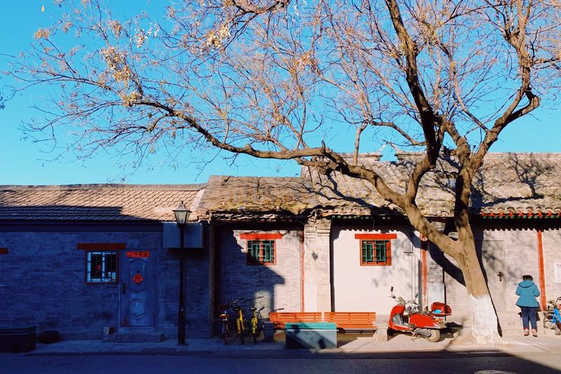 Winter Hutong Traditional Building Colorful Sunny Lightandshadow Day Beijing Dailylife PhonePhotography Building Exterior Architecture Built Structure Building Plant Nature