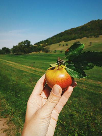 Countryside Apple Harvest Field Autumn Autumn colors Nature Human Hand Fruit Holding Tree Rural Scene Agriculture Field Sky Close-up Landscape Fall Autumn Collection