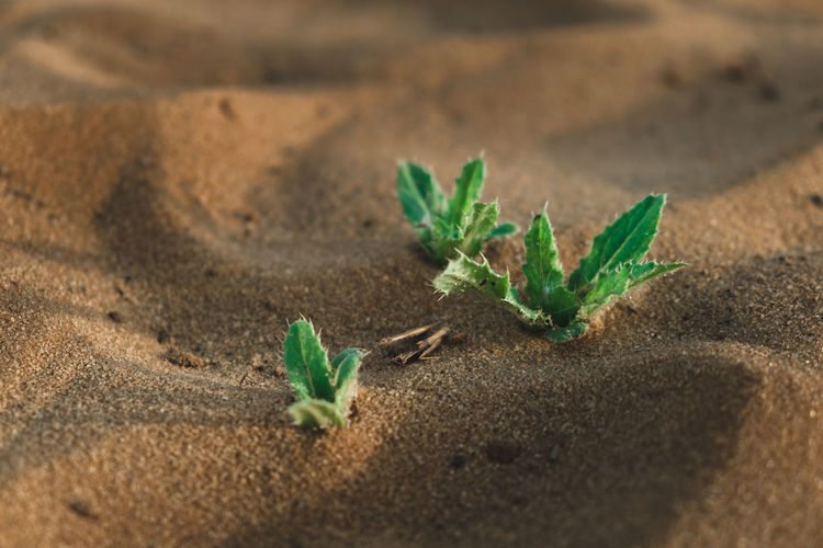 High angle view of small plant growing on sand