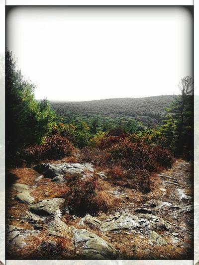 Bluehills MA Nature Photography NatureIsBeautiful Hikingadventures Deepinthewoods Fieldofgreens