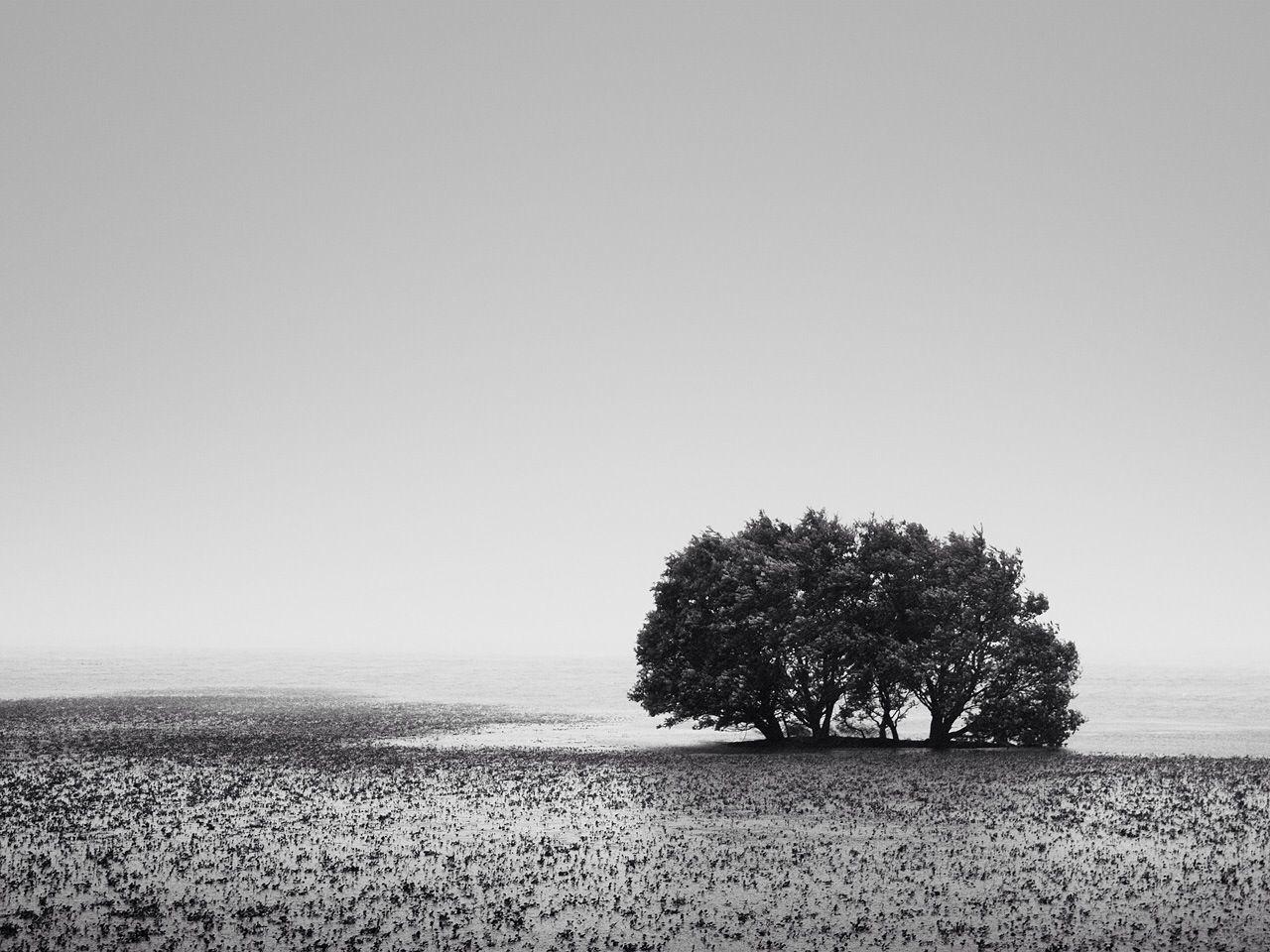 Trees in marshland