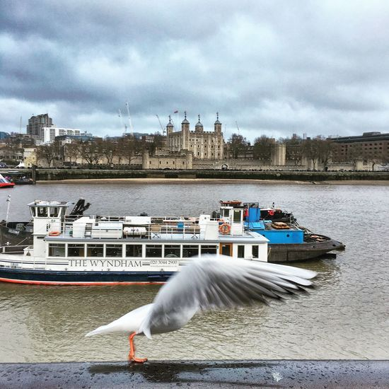 Bird Stretch Bird Seagull London City Stretching Wind Wings Feathers Thames Embankment Water Iconic Nature Photography