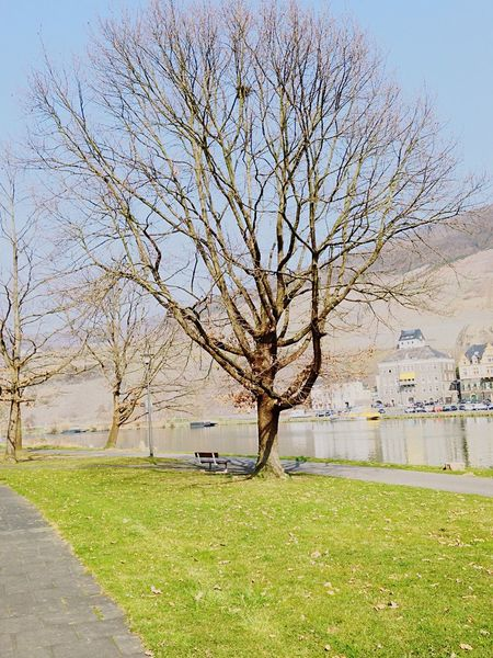 Mosel Tree Blue Sky River