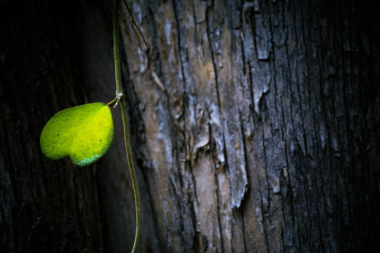 close-up, insect, no people, tree trunk, wood - material, growth, animals in the wild, nature, outdoors, animal wildlife, day, one animal, leaf, animal themes, fragility, beauty in nature, tree