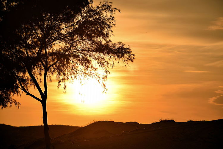 Sunset over sand dunes in Vietnam Beauty In Nature Cloud - Sky Dramatic Sky Landscape Mountain Nature No People Outdoors Scenics Silhouette Silhouette Of Tree Against The Sun Sky Sun Sunset Tree Tree In Sunset Contre-jour Vietnam Sunset Yellow Sun Yellow Sunset