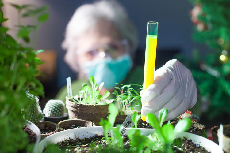 woman chemist experimenting with chemicals and plants holding a test tube with yellow fluid One Person Growth Plant Front View Holding Science Nature Portrait Education Headshot Research Green Color Gardening Biology Botany Scientific Experiment Protective Glove Experiment Food Genetically Modified Scientist Chemist Tube Test Fluid Plants Yellow Glove White Blurred Experience Old person Face Mask Sterile Conditions Garden Nature Natural Agriculture Botanical Pot Gardening Growth Flora Hobby Gardener Soil Fertilizer