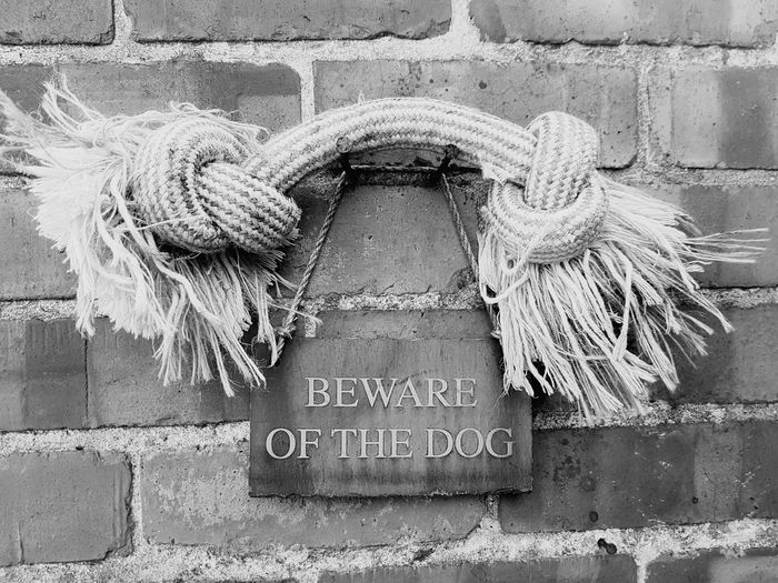 Beware Of Dog Woof Woof Dogslife Dog Bone Dogs House Dog Toy