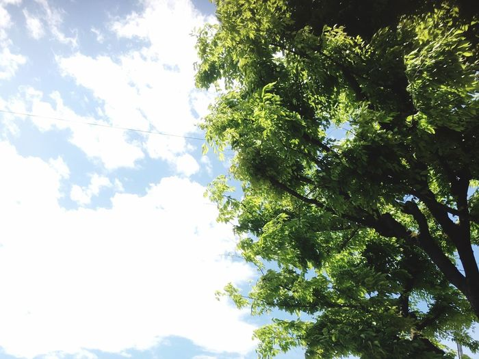Nature Tree Low Angle View Sky Beauty In Nature Day Tranquility Outdoors No People Scenics Branch Forest Freshness