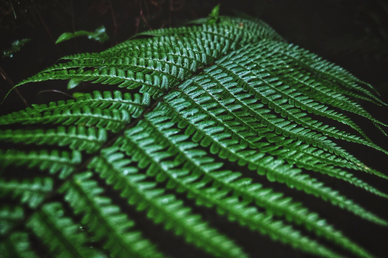 green color, leaf, close-up, full frame, pattern, no people, backgrounds, fern, nature, day, indoors, beauty in nature