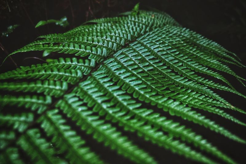 Leaf Green Color Growth Close-up Nature Fern No People Plant Beauty In Nature Backgrounds Day Outdoors
