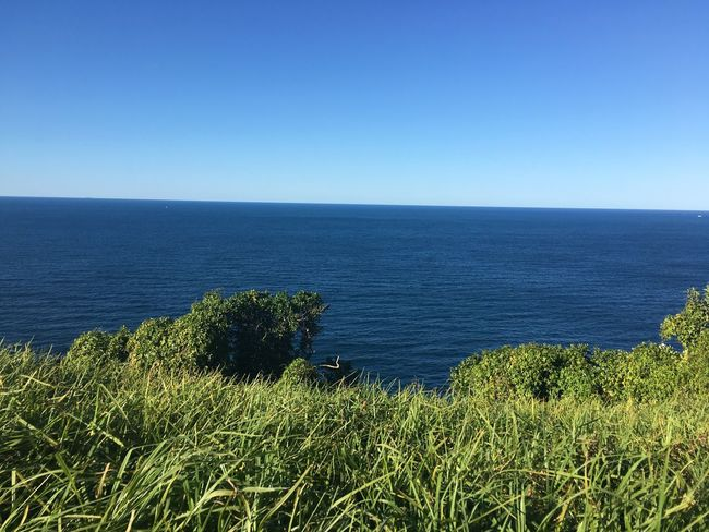 Watsons bay Sydney Sea Horizon Over Water Nature Tranquil Scene Scenics Water Tranquility Beauty In Nature Blue Clear Sky Outdoors Copy Space No People Day Green Color Growth Grass Plant Beach Sky