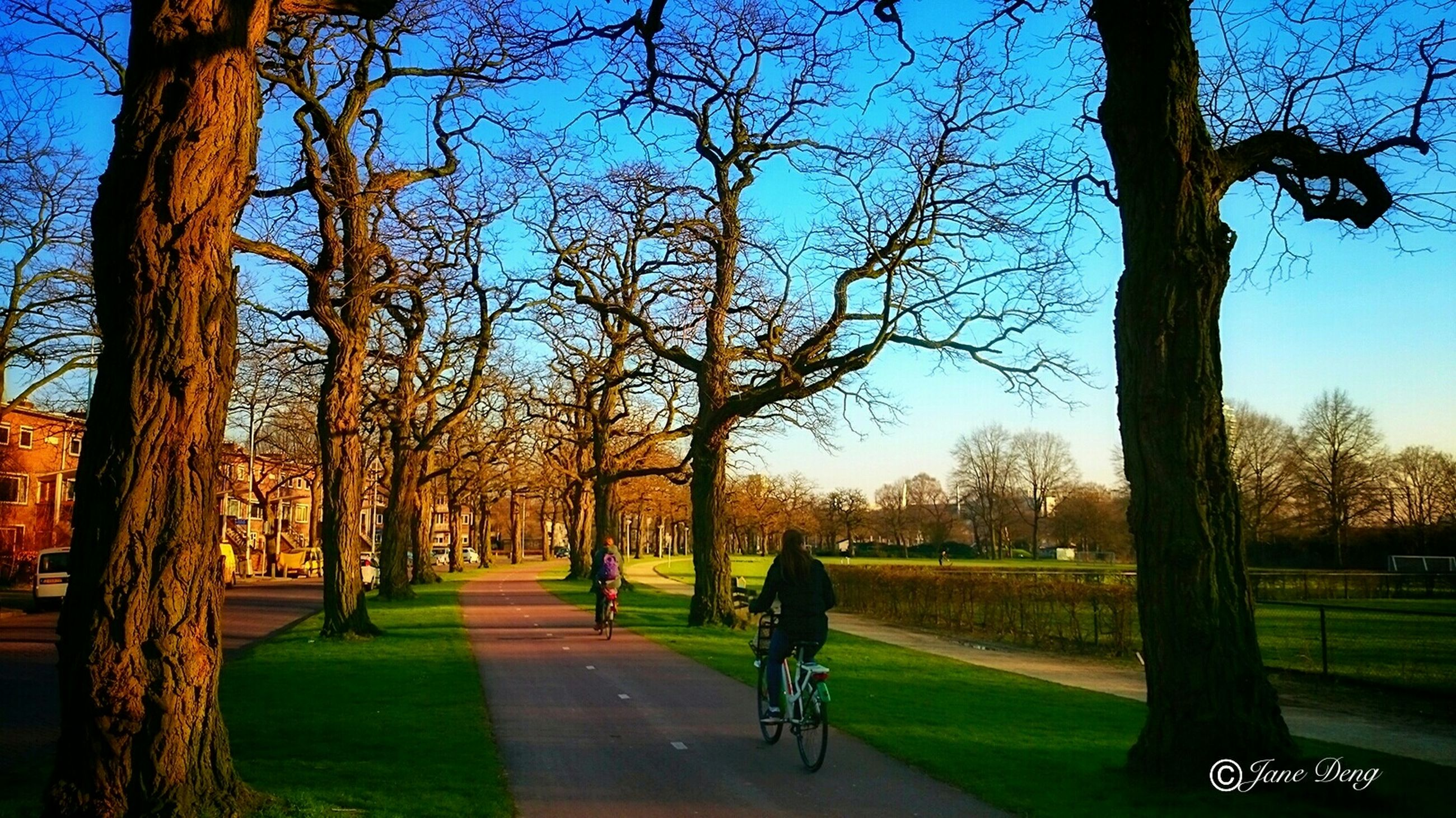 tree, bicycle, transportation, lifestyles, full length, leisure activity, men, grass, land vehicle, riding, road, shadow, walking, sunlight, tree trunk, mode of transport, the way forward, park - man made space