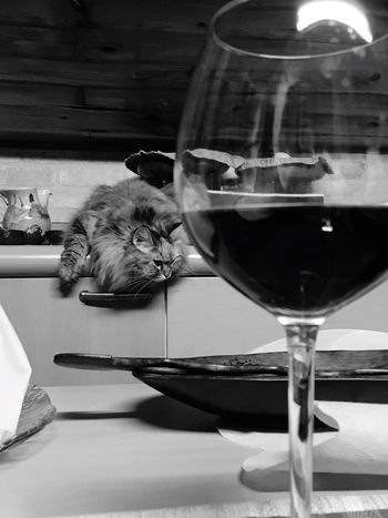 Wine Moments Wine Time Wine Glass Wine Tasting Wine Winetasting Wine Bottle Winery Wineandmore Winelover Cat Cat♡ Cat & New Year Quite Moments Love To Take Photos ❤ Home Sweet Home Blackandwhite Photography Pet Portraits Connected By Travel Black And White Friday