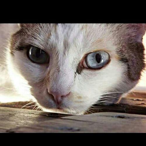 Pets Corner Meow Gatto😸 MicioGatto Gattino Cat♡ O-o-Occhi Di Gatto  Miciomiao Gatto Micio