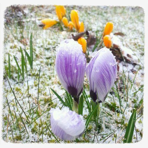 Tungelsta Spring? Snow ❄ WTF!? No no!!!