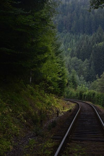 Railway to nature 🌲 Forest Tree Curve Nature Railroad Track Rail Transportation Transportation The Way Forward Tranquil Scene Beauty In Nature No People Outdoors Mountain Day Scenics Landscape Lightroom Nikon Power In Nature