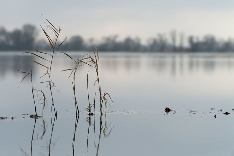 Landsscape photography in the area of Oderbruch in Germany. Field Flooded Grass Water Reflections Animal Themes Beauty In Nature Bird Blurred Background Day Lake Nature No People Outdoors Reflection Scenics Sky Swimming Tranquil Scene Tranquility Water Waterfront