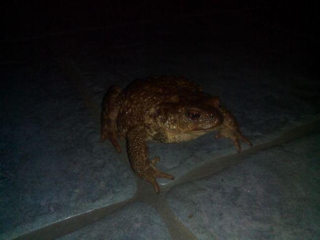 Un crapaud dans la maison Toad Toad Os Peares