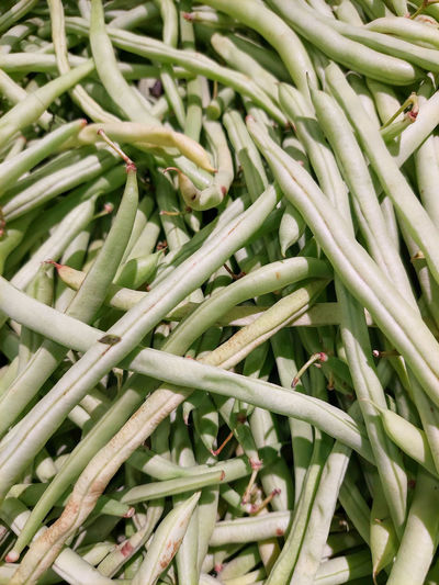 The fresh string beans are one of the best folate sources.