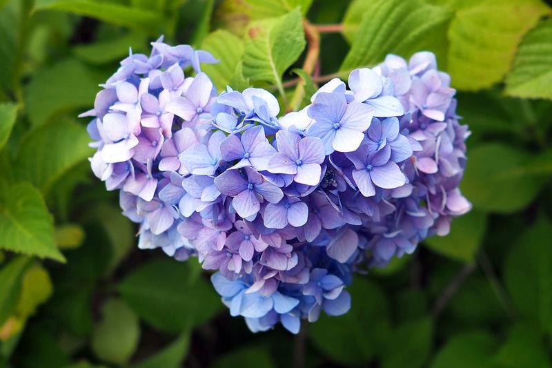 ハート型 Flower