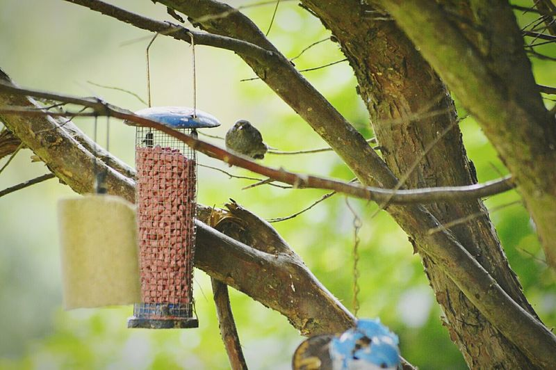Birds Feeding Station Perching Being Spotted By Little Bird. Birds 1 Me 0. Love The Birds Love Wildlife Love Natures Beauty