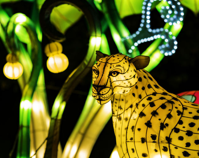 Boernerbotanicalgardens Cheetah China Light Festival Lantern Milwaukee Animal Themes Animals In The Wild Bookeh Close-up Focus On Foreground Illuminated Indoors  Night No People One Animal