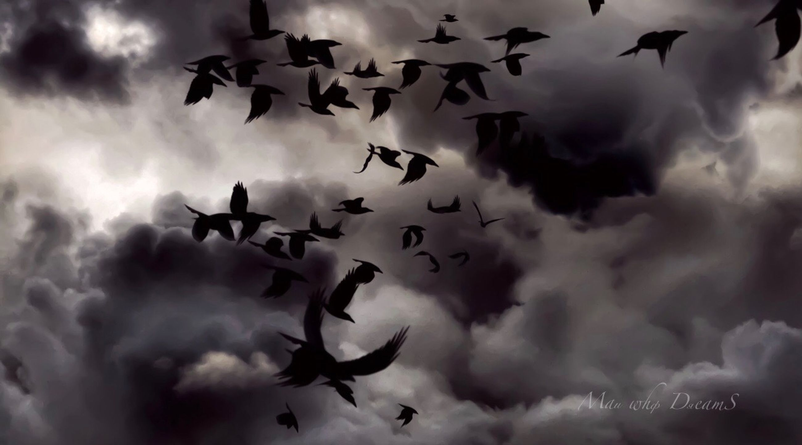 cloud - sky, sky, flying, low angle view, bird, vertebrate, nature, no people, large group of animals, animal, animals in the wild, animal themes, animal wildlife, flock of birds, beauty in nature, silhouette, storm, mid-air, outdoors