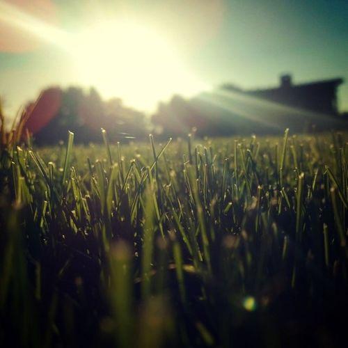 Grass Masi Sun